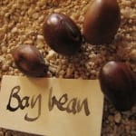 Bay Beans